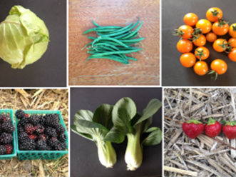 Collage of pictures of brightly colored produce.